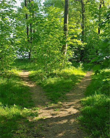 fork - Forked Path in Forest, Mohnesee, Soest District, Suedufer, North Rhine-Westphalia, Germany Stock Photo - Premium Royalty-Free, Code: 600-03906962