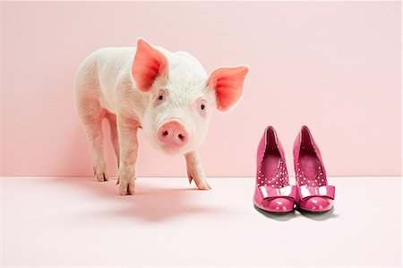 Piglet next to shoes in pink studio Stock Photo - Premium Royalty-Free, Code: 614-05556921