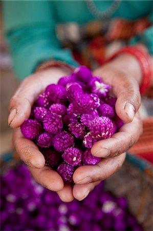Woman holding dyed flowers, Kathmandu, Nepal Stock Photo - Premium Royalty-Free, Code: 614-05650865