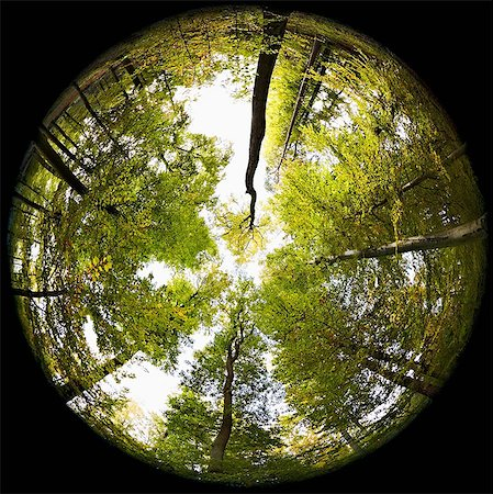 Fisheye perspective of trees in forest Stock Photo - Premium Royalty-Free, Code: 614-05792501