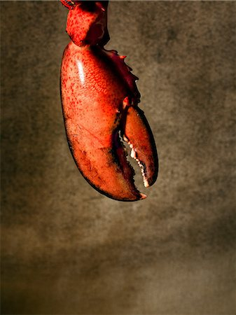 Lobster claw Stock Photo - Premium Royalty-Free, Code: 614-06044761