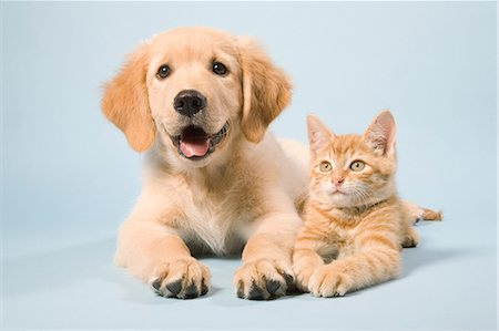 Dog and cat lying down, portrait Stock Photo - Premium Royalty-Free, Code: 614-06043386