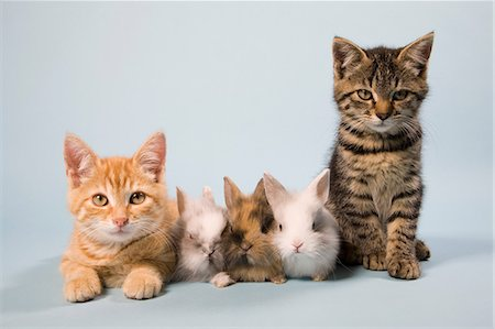 five animals - Cats and rabbits Stock Photo - Premium Royalty-Free, Code: 614-06043390
