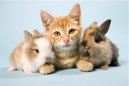 Cat and rabbits Stock Photo - Premium Royalty-Free, Code: 614-06043391