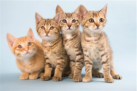 Four cats side by side Stock Photo - Premium Royalty-Free, Code: 614-06043425