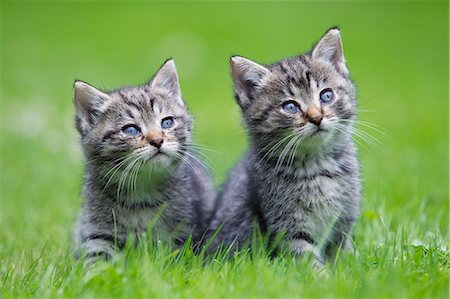 Two kittens on grass Stock Photo - Premium Royalty-Free, Code: 614-06043477