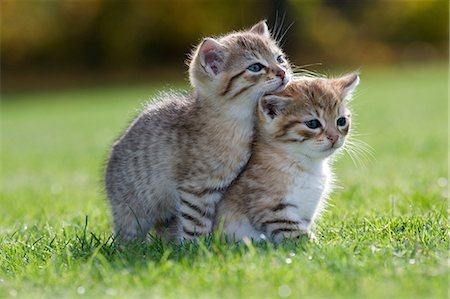 Two kittens on grass Stock Photo - Premium Royalty-Free, Code: 614-06043515