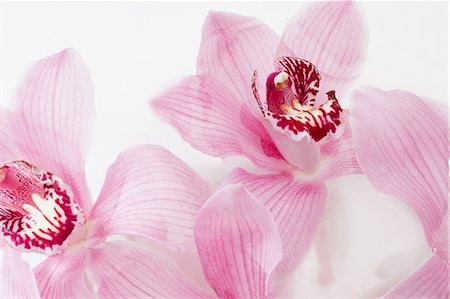 petal - Two pink flowers, close up Stock Photo - Premium Royalty-Free, Code: 614-06043704