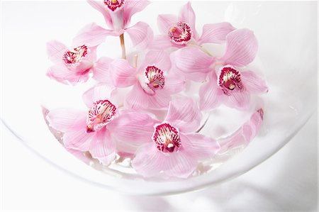 petal - Pink flowers in glass bowl Stock Photo - Premium Royalty-Free, Code: 614-06043706