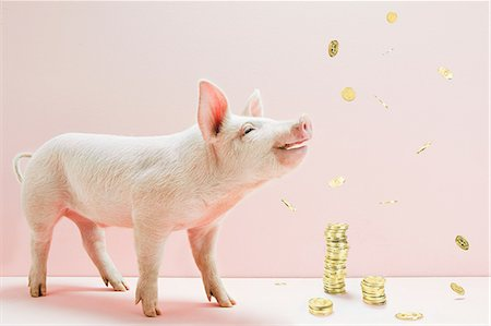 savings - Piglet and falling coins Stock Photo - Premium Royalty-Free, Code: 614-06115982