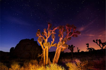 Colorful lights on Joshua Trees at night, Joshua Tree National Park, California, USA Stock Photo - Premium Royalty-Free, Code: 614-06116184