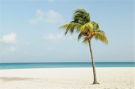 palm - Palm tree on beach Stock Photo - Premium Royalty-Free, Code: 614-06168576