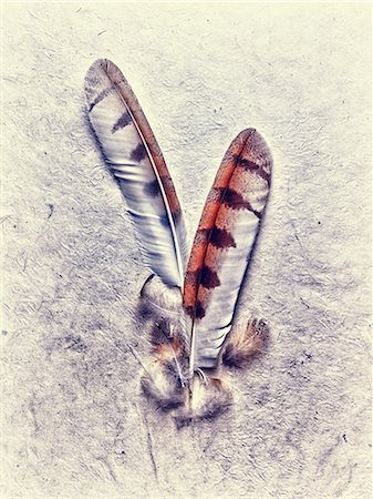 feather  close-up - Owl feathers Stock Photo - Premium Royalty-Free, Code: 614-06402703