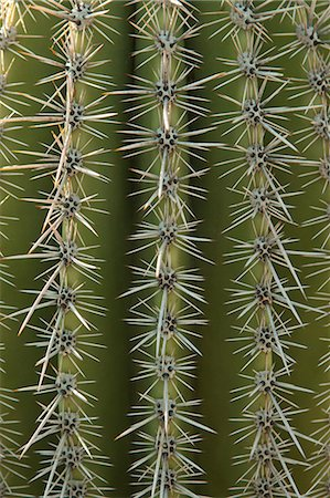 spike - Close up of cactus surface Stock Photo - Premium Royalty-Free, Code: 614-06442962