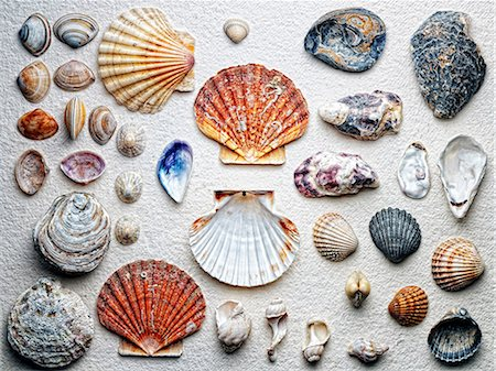 Seashells arranged on paper Stock Photo - Premium Royalty-Free, Code: 614-06624862