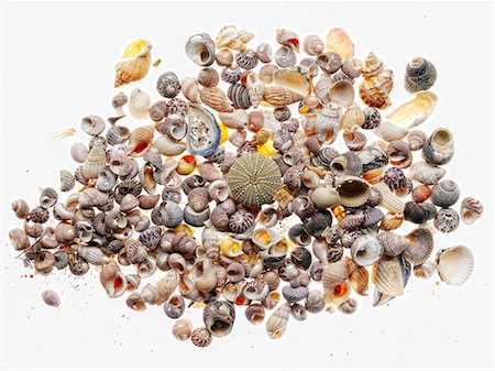 Pile of seashells Stock Photo - Premium Royalty-Free, Code: 614-06624950