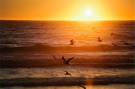 flying bird - Birds flying over beach at sunset Stock Photo - Premium Royalty-Free, Code: 614-06625442