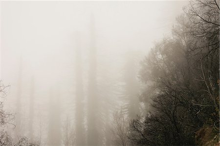 dreamy - Fog rolling over trees in forest Stock Photo - Premium Royalty-Free, Code: 614-06625451