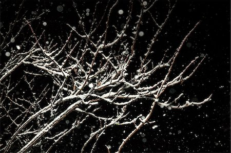 Close up of snow-covered branches Stock Photo - Premium Royalty-Free, Code: 614-06623397