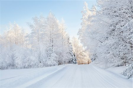 snow covered trees - Snow covered trees and rural road Stock Photo - Premium Royalty-Free, Code: 614-06718312