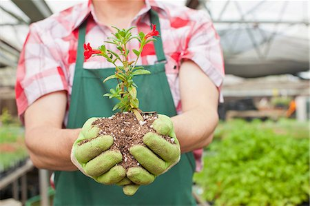 Mature man holding plant in soil in garden centre, close up Stock Photo - Premium Royalty-Free, Code: 614-06896309