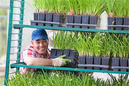 Mature sales assistant arranging shelves of plants in garden centre Stock Photo - Premium Royalty-Free, Code: 614-06896315