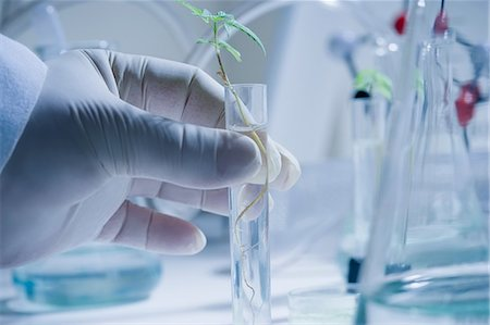 science & technology - Scientist holding test tube with seedling Stock Photo - Premium Royalty-Free, Code: 614-06896637