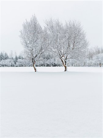snow - Snow covered trees Stock Photo - Premium Royalty-Free, Code: 614-06897321