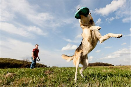 dogs in nature - Alsatian dog catching frisbee Stock Photo - Premium Royalty-Free, Code: 614-06897419