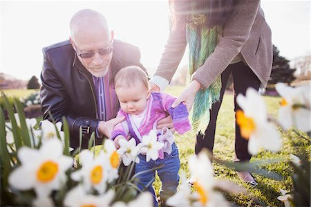 Grandparents with granddaughter amongst daffodils Stock Photo - Premium Royalty-Free, Code: 614-06897413