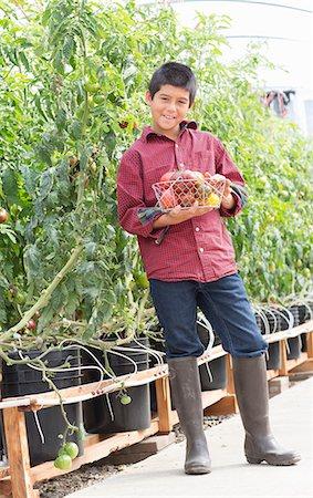 farm and boys - Boy picking fresh tomatoes Stock Photo - Premium Royalty-Free, Code: 614-06974034