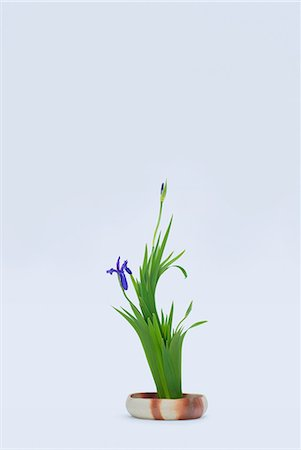 Stylised iris bloom and leafs in bowl Stock Photo - Premium Royalty-Free, Code: 614-06974743