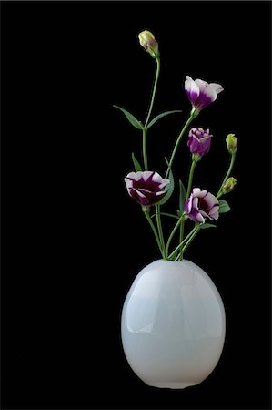 floral - Still life of white vase with purple cut flowers Stock Photo - Premium Royalty-Free, Code: 614-07032086