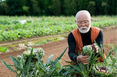 Senior man looking at artichoke in field Stock Photo - Premium Royalty-Free, Code: 614-07032232
