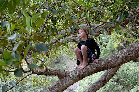 Boy sitting in tree and gazing Stock Photo - Premium Royalty-Free, Code: 614-07735202