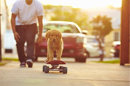 Labrador puppy on skateboard, owner following behind Stock Photo - Premium Royalty-Free, Code: 614-07768104