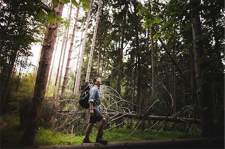 Mature man hiking in forest Stock Photo - Premium Royalty-Free, Code: 614-07806042