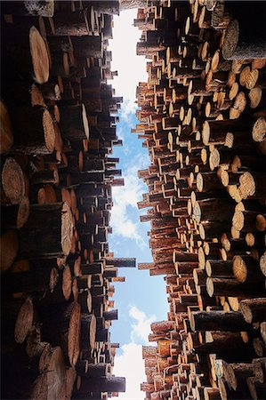 Low angle view of stacked timber in timber yard Stock Photo - Premium Royalty-Free, Code: 614-07911694