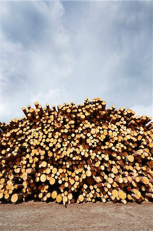 Stacked freshly logged timber in timber yard Stock Photo - Premium Royalty-Free, Code: 614-07911695