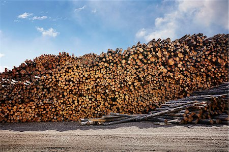 Large stack of logged timber in timber yard Stock Photo - Premium Royalty-Free, Code: 614-07911693