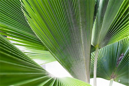 foliage - Close up detail of tropical plant leaves Stock Photo - Premium Royalty-Free, Code: 614-08000362