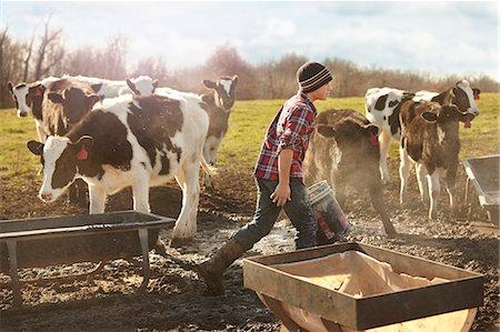 farming (raising livestock) - Boy farmer feeding cows in dairy farm field Stock Photo - Premium Royalty-Free, Code: 614-08065935