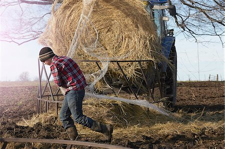 farming (raising livestock) - Boy removing netting from hay stack in dairy farm field Stock Photo - Premium Royalty-Free, Code: 614-08065939