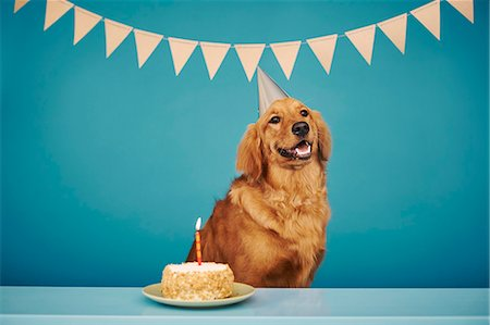 Golden retriever wearing party hat, cake with one candle in front of him Stock Photo - Premium Royalty-Free, Code: 614-08081329