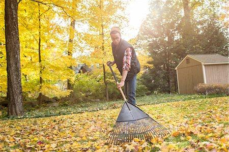 Man raking in autumn leaves garden Stock Photo - Premium Royalty-Free, Code: 614-08488030