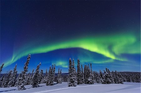 dreamy - Aurora borealis, Northern Lights above tent lit up with lantern, near Chena Resort, near Fairbanks, Alaska Stock Photo - Premium Royalty-Free, Code: 614-08641773