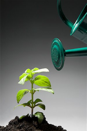Watering can and sapling Stock Photo - Premium Royalty-Free, Code: 614-02244216