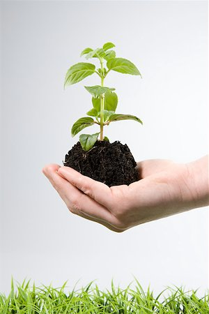 Person holding soil and a sapling Stock Photo - Premium Royalty-Free, Code: 614-02244250