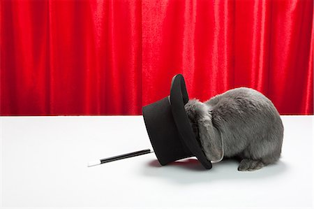 Rabbit with top hat and magic wand Stock Photo - Premium Royalty-Free, Code: 614-03455484