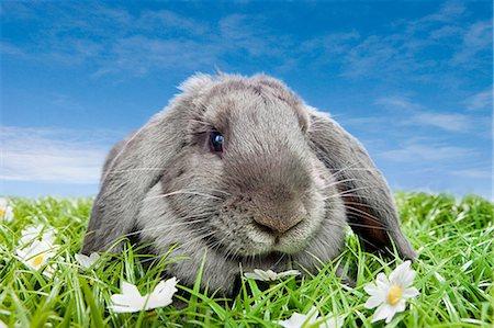 Rabbit on grass Stock Photo - Premium Royalty-Free, Code: 614-03455493